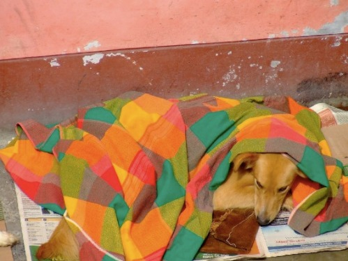 Cojito resting after operation. He´s still waiting for a loving family, who´d take him home and share some space, food and even more important love!
