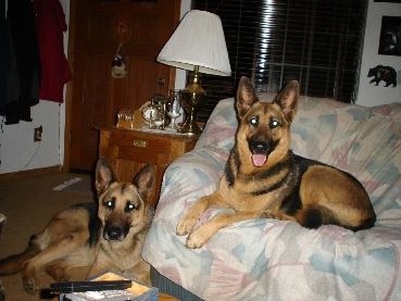 Beautiful Diesel and Wendy, who were adopted by Angela. As you see they are just like her kids!